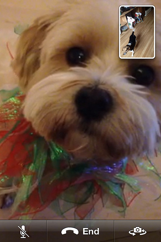 Facetime with a cute dog